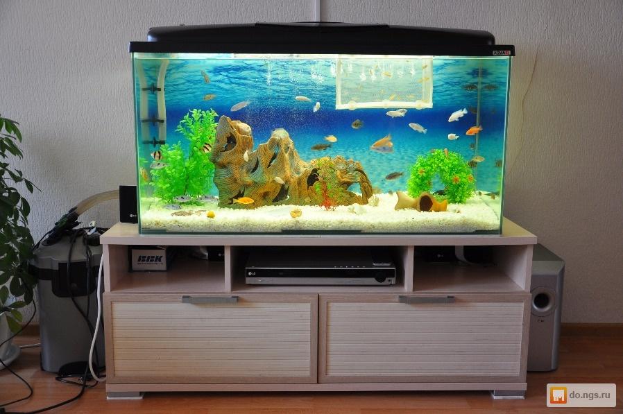 Дизайн для аквариума на 200 литров