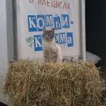 Продам сено в брикетах, Новосибирск