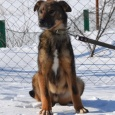 Ларри щенок, Новосибирск