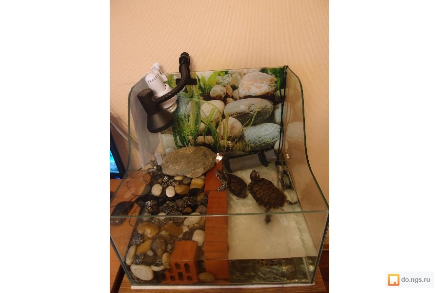 Островок для черепахи из камней своими руками 11