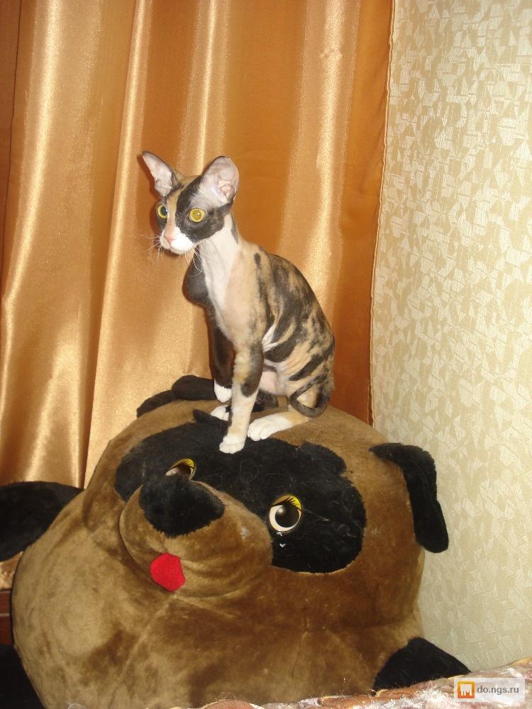 груминг кота фото