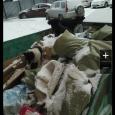 Щеночки в добрые руки, Новосибирск