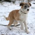 Собачки-дворняжки ждут любимого хозяина, Новосибирск