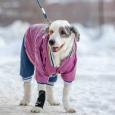 Собака ищет дом, Новосибирск