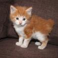 Продам котят 3 девочки и 1 мальчик, Новосибирск