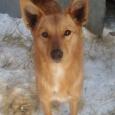 Собака Уля, Новосибирск