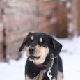 Большой выбор верных и преданных собак, Новосибирск