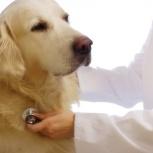Вызов ветеринарного врача на дом (круглосуточно), Новосибирск