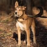Активный пёс Тамир ищет дом, Новосибирск