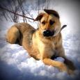 Рэм - отличный друг, охранник и компаньон, Новосибирск