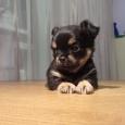 Хочу в семью, щенок, Новосибирск