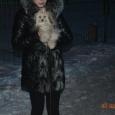 Красивый щенок мальчик  золотой болонки мини, Новосибирск