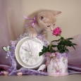 котенок гламур. Мурчащий заяц, Новосибирск