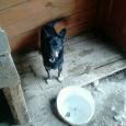 Маленькая волчица (собака), Новосибирск