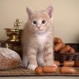 Котёнок по имени Гав, Новосибирск
