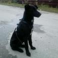 Черные собачки, Новосибирск