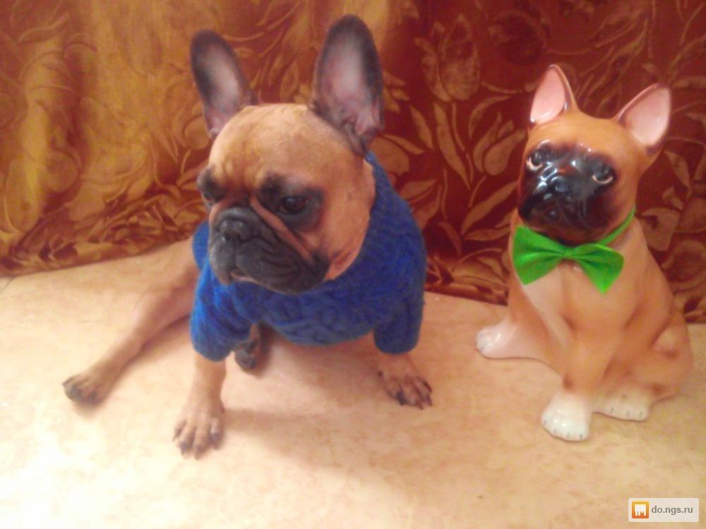 Одежда Для Собак Новосибирск