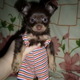 домовёнок (собака), Новосибирск