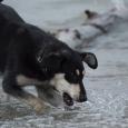 Умница Дора (щенок-подросток), Новосибирск