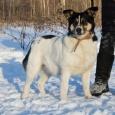 Собака Белка, Новосибирск
