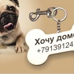 Брелок на ошейник Вашего питомца!, Новосибирск