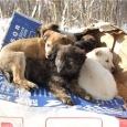 6 щенков нуждаются в семье, Новосибирск
