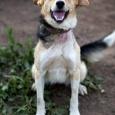 Веселая собака Рада, Новосибирск