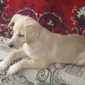 Солнечная зайка ищет родителей (3 мес.девочка), отдам собаку, Новосибирск