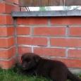 Ищу хозяев для малыша (щенок), Новосибирск