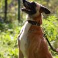 Джесси преданная (собака), Новосибирск