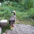 Пес Булат, Новосибирск