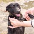 Милая собака в добрые руки, Новосибирск