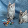 Замечательные детки котята, Новосибирск