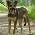 Собака-улыбака Дана, Новосибирск