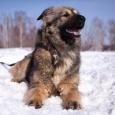 Райда - собака радость, Новосибирск