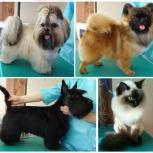 Стрижка собак. Модельные и породные. Стрижка кошек, Новосибирск