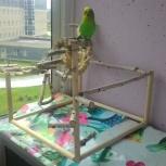 Игровой стенд для попугаев, Новосибирск