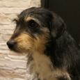 очаровательная собачка ищет дом, Новосибирск