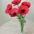 Лепка цветов из полимерной глины (холодного фарфора). Мастер классы, Новосибирск