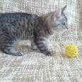Чудесный котик Шелл, Новосибирск