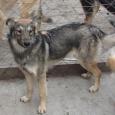 Злат, Альма и Дина ждут своего хозяина (собаки), Новосибирск