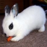 крольчонок-очаровашка, Новосибирск