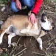 Собака. Добрый Тузик в очень добрые руки!, Новосибирск