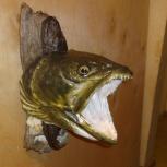 Таксидермия: изготовление чучел рыб, птиц и зверей, Новосибирск