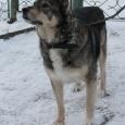 Собака Ронда, Новосибирск