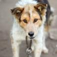 Надежный пес для охраны дома, Новосибирск