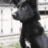 Джуди ищет семью., Новосибирск