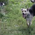 Очаровательная девочка собака Бетти, Новосибирск