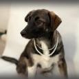 Бэтти щенок, Новосибирск