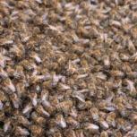 Пчелосемьи и пчелоинвентарь, Новосибирск